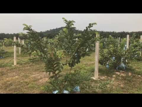 Video   Agricode Green Sdn Bhd