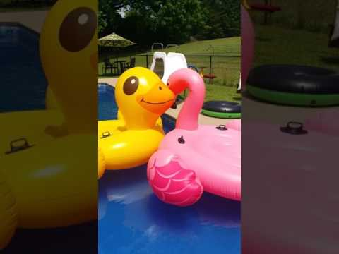 Duck and Flamingo Love