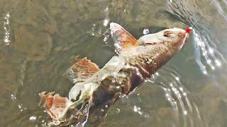 Пучежская рыбалка 2020 итоги
