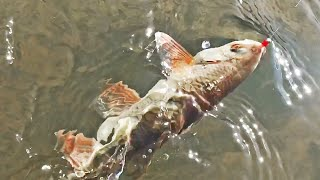 Рыба рыбалка в казахстане на реке или