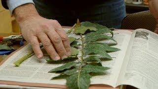 Herbier national, un outil scientifique