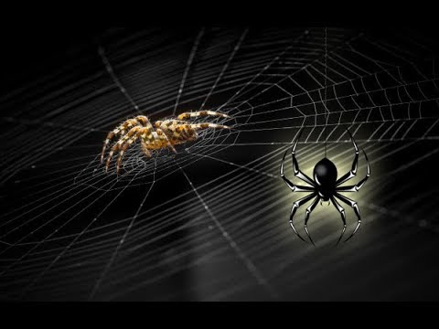 Паук во сне - К чему снятся пауки?