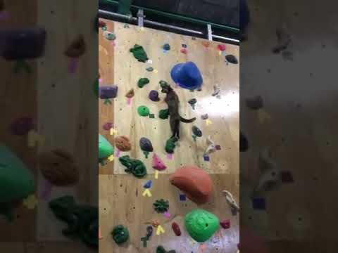 Gatinha Lalah faz escalada em academia