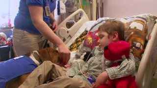 Therapy Dogs Bring Joy to Cincinnati Children's Patients