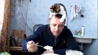 Кот зарабатывает кусок мяса