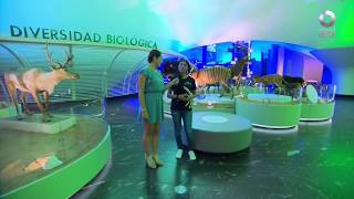 D Todo - Museo de Historia Natural renovado