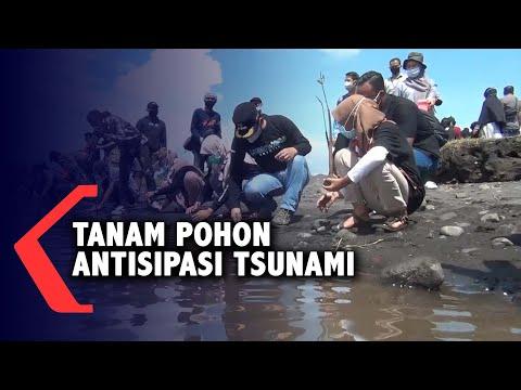 antisipasi bencana tsunami dengan menanam pohon