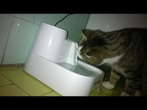 Info gatto: ho acquistato la fontanella per gatti della Cat Mate