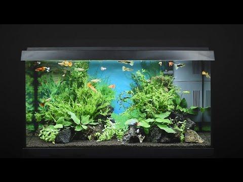 Juwel Primo 60 Led aquarium