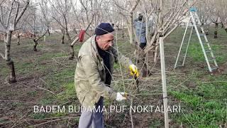 BADEM BUDAMA'DAKİ PÜF NOKTALAR