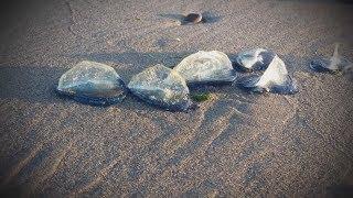 5 Очень Странных Вещей, найденных на Пляже когда-либо. Находки удивили даже бывалых