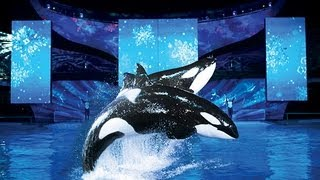 Christmas At Sea World Orlando!!! (11.12.12)
