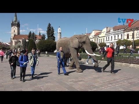 Slon v centre mesta