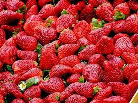 Почему женщинам нужно есть клубнику: 5 незаменимых свойств ягоды