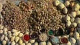 Seashell Shop in Gujarat