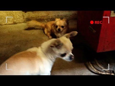 Film sulle donne che hanno sesso con i cani