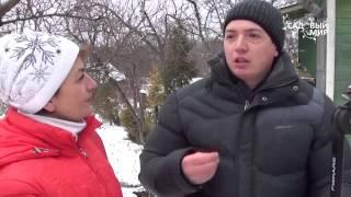 Заготовка черенков для весенней прививки видео