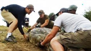Capturer un crocodile : le coup de stress - ZAPPING SAUVAGE