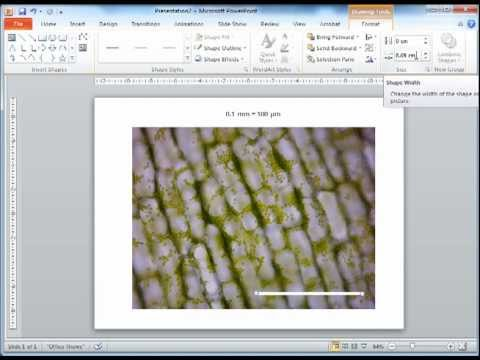 Adding A Scale Bar Onto A Microscopy Image Using PowerPoint Mp3