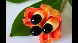 Ackee Fruit Health Benefits