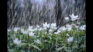 Johnny Tillotson - Rhythm of the Rain - Baz