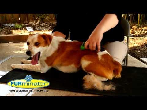 Фурминатор для шерсти животных в магазине бетховен