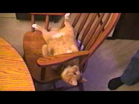 Cat Does Amazing Chair Flip