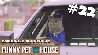 СМЕШНЫЕ ЖИВОТНЫЕ И ПИТОМЦЫ #22 НОЯБРЬ 2018 [Funny Pet House] Смешные животные