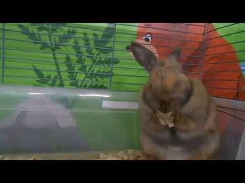 На морковку,на морковку!!!