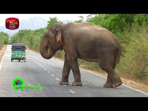 Sobadhara - සොබාධාරා | Season 2 | Episode - 31 | 2018-08-17 | Rupavahini Documentary