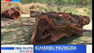 Residents wake up to shock as unknown people cut down over 200 trees near Lake Naivasha