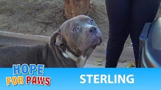 Abandoned Pit Bull doesn't lose hope that some people are awesome!