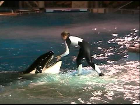 Takara (with Dawn) - Shamu Rocks America (November 2004)