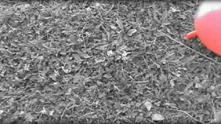 Peha - Spomaľ  ( videoklip )