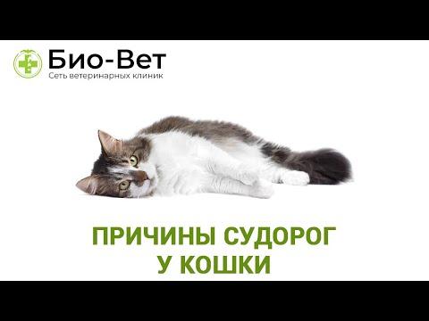 Судороги у Кошки или Кота // Причины, Лечение и Что Делать // Сеть Ветклиник БИО-ВЕТ