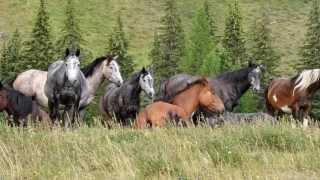 Фото удивительно красивых лошадей