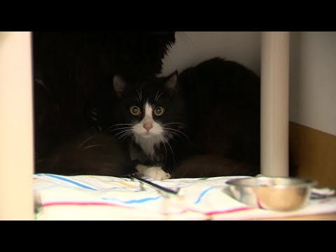 80 cats, kittens rescued from overcrowding situations