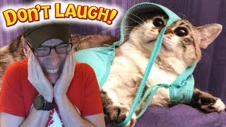 THE FUNNIEST TIK TOK KITTY EVER!!!   Try Not To Laugh Challenge: Funny Animals Edition #3