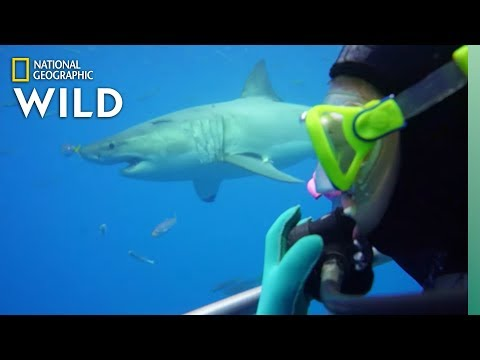 How Scientists Study Sharks | Nat Geo Wild
