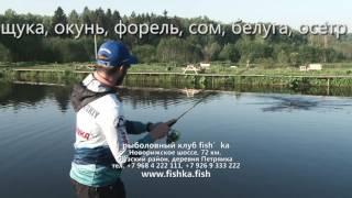 Д данилово московская область рыбалка клуб фишка