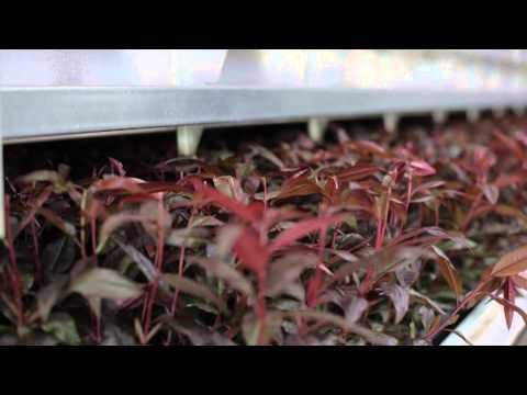 AGROMILLORA - CORPORATE VIDEO