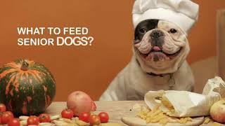 Senior Feeding Guide  - Dog Food For Older Dogs