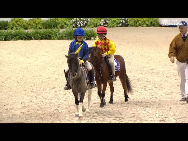 Shetland-pony-race