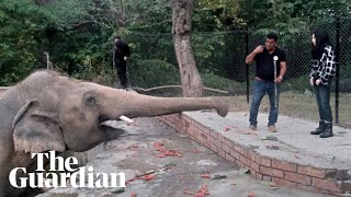 Cher serenades 'world's loneliest' elephant after move to Cambodia