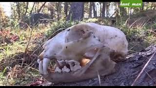Охота на марала на Алтае