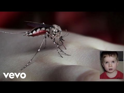 Mosquito (Song) by Yeah Yeah Yeahs
