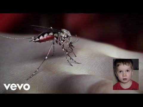 MosquitoMosquito