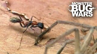 Epic Ant Battles #2 | MONSTER BUG WARS
