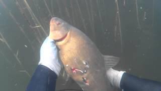 Нац парк браславские озера ловля рыбы