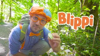 Blippi Goes Hiking   Environmental Learning For Kids   Educational Videos For Toddlers